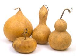 A handsome group of gourds