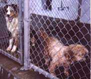 Dogs in the pound.  Click to follow the link.